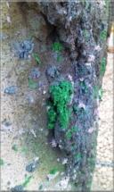 Betonová plastika16