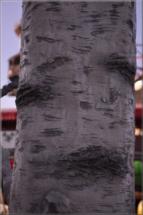 Betonová plastika5
